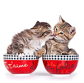 CAT 03 KH0534 01