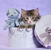 CAT 03 KH0538 01