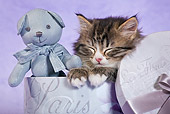 CAT 03 KH0539 01