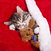 CAT 03 KH0540 01