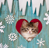 CAT 03 KH0541 01