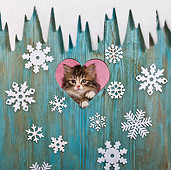 CAT 03 KH0542 01