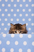 CAT 03 KH0549 01