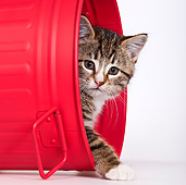 CAT 03 KH0551 01