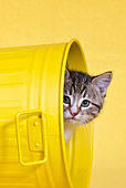 CAT 03 KH0552 01