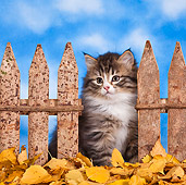 CAT 03 KH0559 01