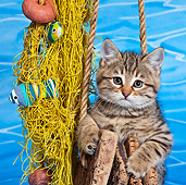 CAT 03 KH0561 01