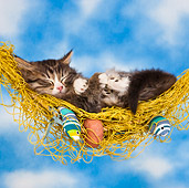 CAT 03 KH0562 01