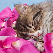 CAT 03 KH0565 01