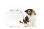 CAT 03 KH0570 01