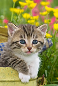 CAT 03 KH0573 01
