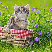 CAT 03 KH0578 01