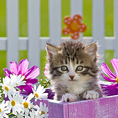CAT 03 KH0584 01