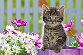 CAT 03 KH0585 01