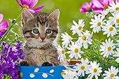 CAT 03 KH0586 01