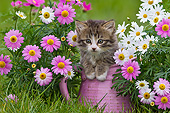 CAT 03 KH0588 01