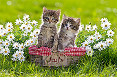 CAT 03 KH0590 01