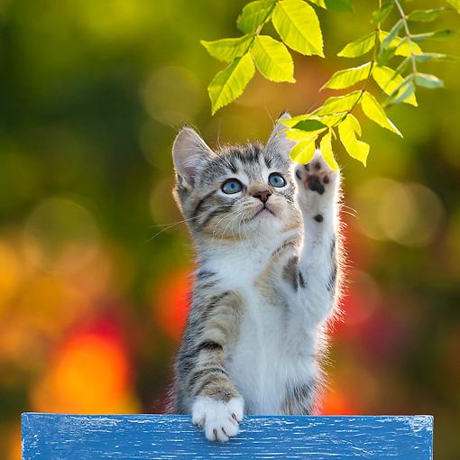 cat lynx autumn foliage - photo #24