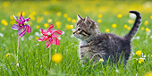 CAT 03 KH0597 01