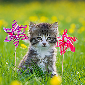 CAT 03 KH0598 01
