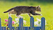CAT 03 KH0599 01