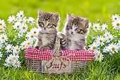CAT 03 KH0603 01