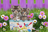 CAT 03 KH0606 01