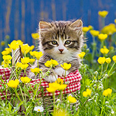 CAT 03 KH0607 01