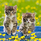CAT 03 KH0608 01