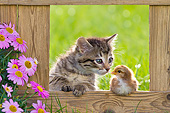 CAT 03 KH0612 01