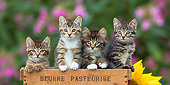 CAT 03 KH0615 01