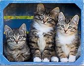 CAT 03 KH0616 01