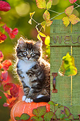 CAT 03 KH0619 01