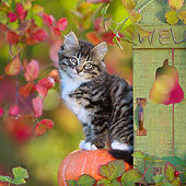 CAT 03 KH0621 01