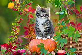 CAT 03 KH0623 01