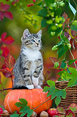 CAT 03 KH0624 01