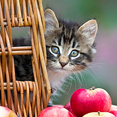 CAT 03 KH0626 01
