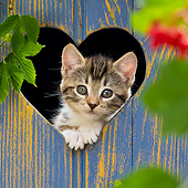 CAT 03 KH0627 01