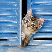 CAT 03 KH0628 01