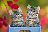 CAT 03 KH0630 01