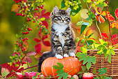 CAT 03 KH0637 01