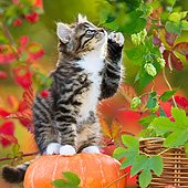 CAT 03 KH0638 01