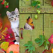 CAT 03 KH0639 01