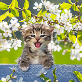 CAT 03 KH0640 01