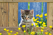CAT 03 KH0651 01