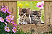 CAT 03 KH0652 01