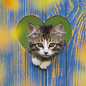 CAT 03 KH0653 01