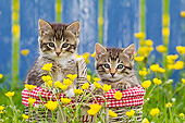 CAT 03 KH0654 01