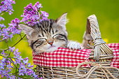 CAT 03 KH0657 01