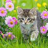 CAT 03 KH0659 01